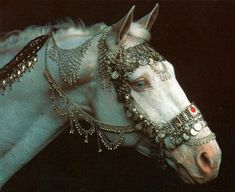 I like pretty things, fantastical creatures, and tragic stories. All The Pretty Horses, Beautiful Horses, Animals Beautiful, Cute Animals, Majestic Horse, Beautiful Things, Horse Gear, Horse Tack, Gypsy Horse