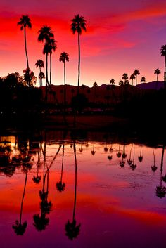Palm Springs Sunset, by PhotosbyFlood -- I'm sooo ready for March! Can't wait to see this for myself!