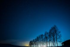 Night Tree's - Hokkaido  Biei.  Tree which is beautiful and equals. I go, the seen star is also beautiful.