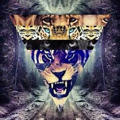 Tiger / Triangle Collage