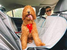 Dog Travel, Seat Covers, Amazing Destinations, Sheds, Hammock, Your Dog, Car Seats, Pup, Interior