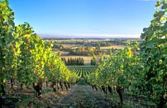 Superb pinot noir in the Willamette Valley! http://www.cntraveler.com/food/2003/03/Hitting-the-Trail-Wine-in-Review