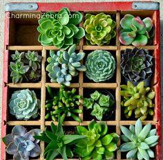 Turn a vintage soda crate into a succulent planter.  @ CharmingZebra.com