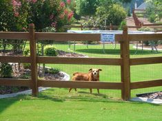 4 Rail fence w/ wire . 4 Rail fence w/ wire . Front Yard Fence, Farm Fence, Diy Fence, Backyard Fences, Fence Gate, Garden Fencing, Backyard Projects, Fenced In Yard, Fence Ideas