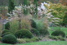 Злаки для альпийской горки Herb Garden, Home And Garden, Plant Art, Natural Garden, Ornamental Grasses, Topiary, Backyard Landscaping, Evergreen, Shrubs