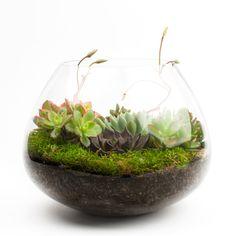 We love fridays earth week edition diy terrarium kit diy diy terrarium kits for succulents and air plants solutioingenieria Image collections