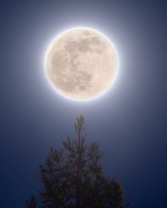 2021 Pink Supermoon Super Moon, Space Pics, Celestial, Pink, Outdoor, Photos, Outdoors, Pictures, Outdoor Games