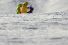 Teletubbies en la nieve Facebook: Yani Fotografía