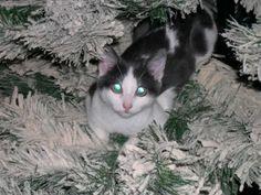 Cat Christmas Tree, Holiday Tree, Christmas Holidays, Xmas, Twas The Night, The Night Before Christmas, Cat Toys, Cats And Kittens, Climbing