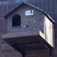 Heart of England Raptors - Barn Owl Nest Box Owl Nest Box, Owl Box, Bird Boxes, Nesting Boxes, Owl House, Nests, Raptors, Wild Life, Birdhouses