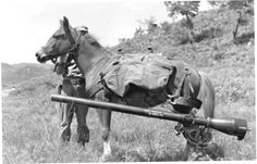 Sgt Reckless an AMAZING little mare who fought with Marines in the Korean War! Her story is so touching. Click to read! It's great.