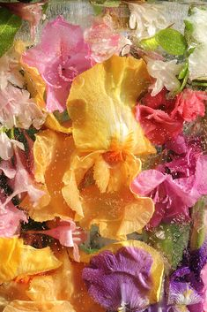 Gardening Hacks That Anyone Can Use Flower Aesthetic, Mellow Yellow, Pretty Flowers, Wall Collage, Aesthetic Pictures, Art Inspo, Aesthetic Wallpapers, Iphone Wallpaper, Art Photography