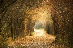 """Autumn Fades"" by islandtime"