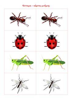 ένα ιστολόγιο για το νηπιαγωγείο Montessori Materials, Montessori Activities, Toddler Activities, Preschool Printables, Preschool Classroom, Preschool Crafts, Insect Crafts, Bug Crafts, Motor Skills Activities