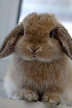 "* * ""Me needs financial aide az me famblee beez very large. Rabbit famblee dat be.."""