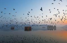 Jal Mahal at Dawn | Photo by Ravikanth K, on Flickr.