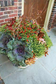 flores del sol: container gardening