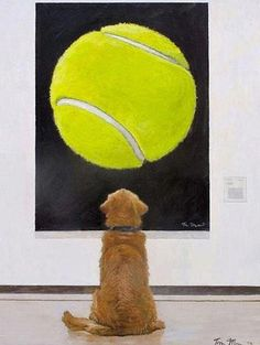 Dog art.... dog staring at tennis ball
