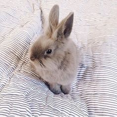 Bunny on the bed! 🐰 #cologneandcotton #bedspreads #quilts #bedding #purecotton thanks @allyhopkins for the pic x