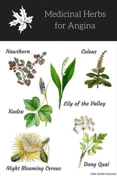 Holistic Health Remedies herbs for angina - Information on the Benefits and Side Effects of Medicinal Herbs Used as Herbal Remedies for Natural Treatment of Angina Pectoris and Relief Herbal Magic, Herbal Cure, Herbal Remedies, Health Remedies, Holistic Remedies, Angina Pectoris, Cold Home Remedies, Natural Home Remedies, Healing Herbs
