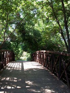 Creek near my house where I love to take morning walks