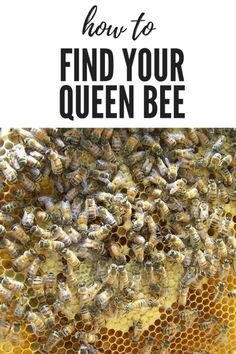 How to find the Queen bee OR - Where's Waldo How to locate the queen bee in the hive. Beekeeping For Beginners, Raising Bees, Raising Ducks, Bee Boxes, Wheres Waldo, Bee Farm, Backyard Beekeeping, Save The Bees, How To Keep Bees
