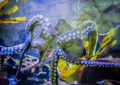 While humans were busy wrecking the ocean, cephalopods were taking advantage.