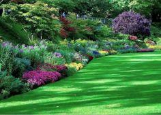 #flora #kwiaty #flowers #green #nature #ogrod #garten #trawa #grass