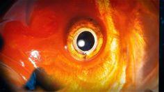 """Video on my song : """"A la mémoire des poissons rouges"""" https://www.jamendo.com/track/1327179/a-la-memoire-des-poissons-rouges"""