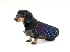 Disco Dog – Le manteau connecté pour les chiens