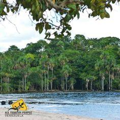 Una vista del abanico de palmeras que rodea la laguna de un paraíso llamado #Canaima ❤️  by @lilygarcesdesign #AllTerrainPeopleVenezuela  #venezuelatequiero #trekking #mochileros #extremo #igersvenezuela #naturaleza #gopro #aventura #ecoturismo #deportesextremos #venezuela #extremesports #adventure #travel #traveling #visiting #trip #photooftheday #tourism #tourist #mytravelgram #travelgram #igtravel #montañismo