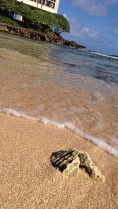 Oahu, Hawaii. Turtle Bay Resort.