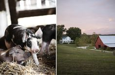 farm-II-007 | Jennifer Silverberg Photography