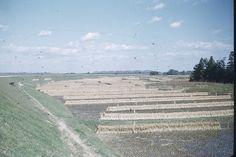 #1949#fukushima