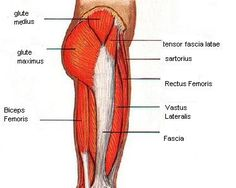 hip muscles picture