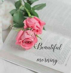 Books & flowers discovered by 𝓈𝒶𝓂𝒶𝓃𝓉𝒽𝒶 𝓈𝑒𝓇𝑒𝓃𝒶 ✰ Love Rose Flower, Beautiful Rose Flowers, Flower Car, Book Flowers, Flowers Nature, Beautiful Flowers Wallpapers, Cute Wallpapers, Jesus E Maria, Rose Flower Wallpaper