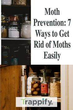 Are you tired of your seasonal bouts against moths? Have you had enough of seeing them ravage your cooking ingredients or clothes? Then you need to learn the most effective ways in moth prevention. Getting rid of moths is not the same as eliminating small bugs and insects. It involves certain techniques and considerations that go through future prevention. Gnat Traps, Fly Traps, Indoor Vegetable Gardening, Organic Gardening Tips, Flying Insects, Bugs And Insects, Hanging Plants, Indoor Plants, Getting Rid Of Moths