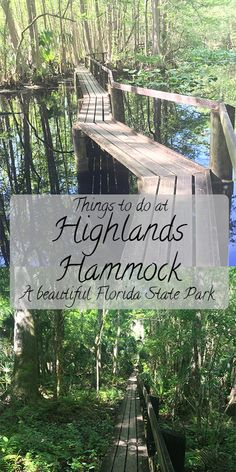 Things to do at beautiful Highlands Hammock State Park in Florida! Link up and share your adventures for Places In Florida, Old Florida, Florida Vacation, Florida Travel, Florida Beaches, Travel Usa, Florida Girl, Beach Travel, Florida Springs
