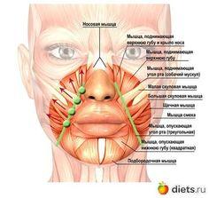 Risultato immagini per facial muscles eyes Massage Facial, Yoga Facial, Facial Muscles, Beauty Secrets, Beauty Hacks, Face Care, Skin Care, Face Anatomy, Face Health