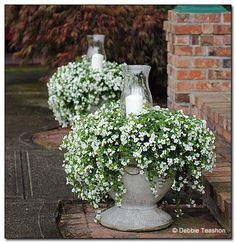 Container gardening is a fun way to add to the visual attraction of your home. You can use the terrific suggestions given here to start improving your garden or begin a new one today. Your garden is certain to bring you great satisfac Container Flowers, Container Plants, Container Gardening, Flower Pot Centerpiece, Flower Arrangements, Horse Flowers, Diy Flowers, Outdoor Planters, Outdoor Gardens