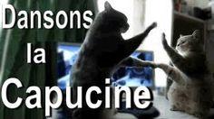 Dansons la capucine, via YouTube.    BEST WAY TO CURE A BAD DAY!!