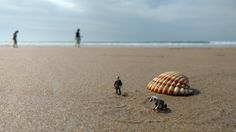 Riesen Muschel am Strand 😉