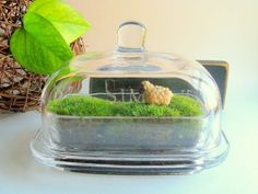 Butter dish recycled