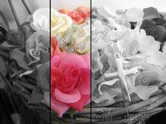 Roses. Black and white.
