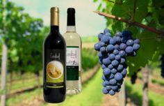 Bodega Castibell ubicada en Belmonte. Fue fundada en el año 1945. Actualmente, cuenta con 232 socios y con 606 hectáreas de viñedo que aportan cerca de 4.000.000 kg. de uva