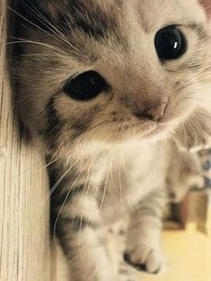 Cute Kittens And Puppies Cute Cats And Kittens Cute Baby Animals, Animals And Pets, Funny Animals, Funny Kittens, Animals Images, Cute Kittens, Cats And Kittens, Kittens Meowing, Ragdoll Kittens