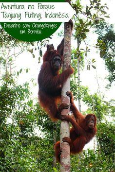 Viagem ao Parque Tanjung Puting em Bornéu, Indonésia e o encontro com…