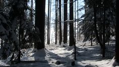 Winter Mood. Snow, Winter, Plants, Outdoor, Winter Time, Outdoors, Plant, Outdoor Games, The Great Outdoors