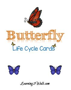 Butterfly Life Cycle Cards
