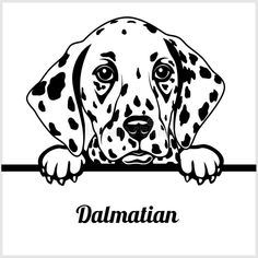 Dalmatian - Peeking Dogs - - breed face head isolated on white royalty free illustration Bird Silhouette Art, Silhouette Design, Banksy Stencil, Pyrography Designs, Dog With Glasses, Elephant Wall Art, Wood Burning Art, Mandala Drawing, Cool Pets